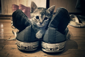 My kitty Kat between my ankle converse by sexypaige100