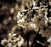 Fragility by TessBlack