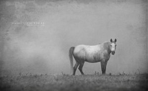 Horse in mist by Stridsberg