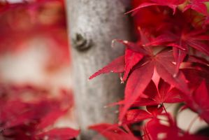 Purple-Red Leafs by esbenlp