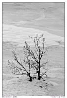 The Lonely Tree by Aderet