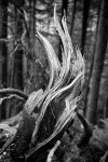 Twisted Stump by ASFShoots