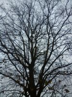 Winter tree by giart1