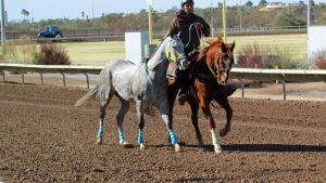 Racehorse Stock 61 by Rejects-Stock