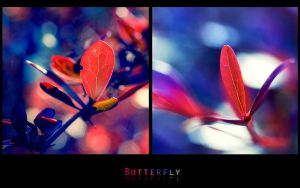 butterfly.1280-800 by Altingfest