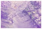 2012 sakura wallpaper by jyoujo