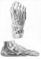 Muscles of the Foot by arvalis