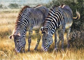 Grevy Zebras Stage 6 by WillemSvdMerwe