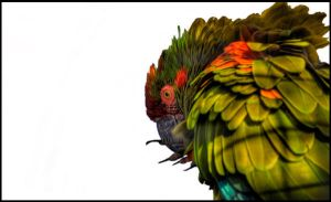 Thick Billed Parrot by Kem2000