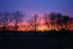 Frosty Morning by Paigesmum
