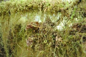 Moss1 by wolfstockphotos