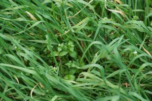 .grass by aaronius
