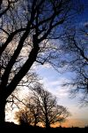 Kirkcudbright: Winter Trees1 by Coigach