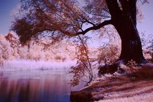 Infrared Wetlands by Argolith