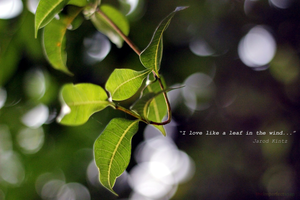 I love like a leaf in the wind... by anoopthefriend