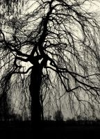 tree silhouette by jynto