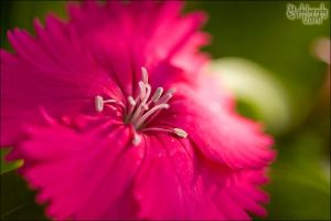 Pretty In Pink by ILTBY