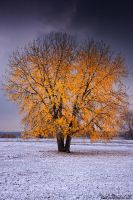 Beacon Of Color by kkart
