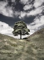 Sycamore Gap 3 untextured by newcastlemale