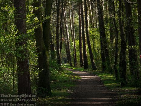 Sunny Forest Road - Germany 2017 by TheFunnySpider