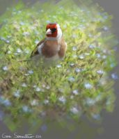 European goldfinch by makangeni