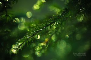 Pine Needles Of The Spring by JoniNiemela