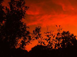sunset_over_Silhouette_trees by jasonclaude