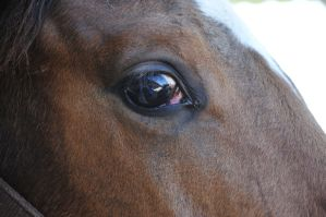 Equine Close-up by iekaradag