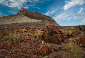 Petrified Forest by jamezevanz