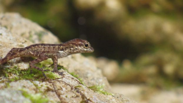Brown Anole by KittyN122
