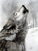 Howling Wolf by Erika-Farkas