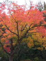 Bright Leaves by knowthyself89