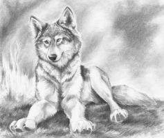 Sitting Wolf by greenleafcm
