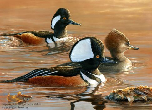 Three's a Crowd - Hooded Mergansers by Nambroth
