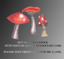 Mushrooms001 by Out-of-Africa