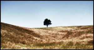 A lone tree by veegee03