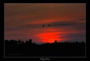 Migration by Sagittor
