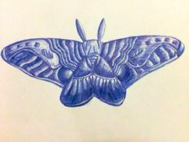 moth 1 by tong669982