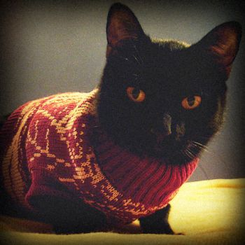 the sweater by ribcage-menagerie