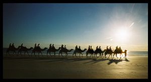 Camels on Cable Beach 6 by wildplaces