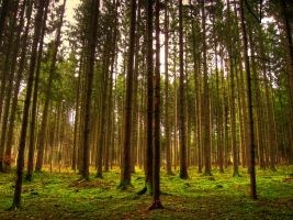 Forest by kkeman