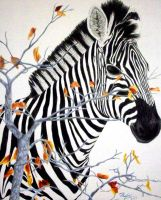 Zebra -colored pencil- by NoKnack