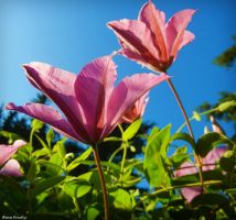 Two flowers by Ranae490