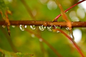 Water Droplets2 by Tyler007