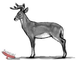 White Tailed Deer by Esava