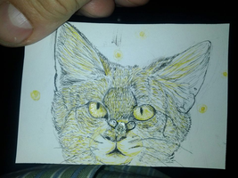 Pen and ink kitty by RobinRings