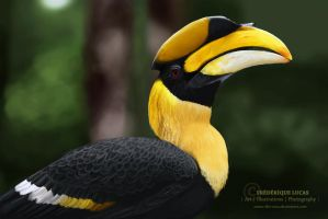 Great pied hornbill - painting study by namu-the-orca