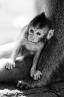 Little Macaca by frankylie