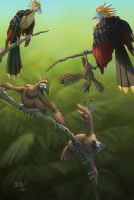 Hoatzin Family by Zoltan86