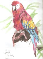 parrot by Fajralam